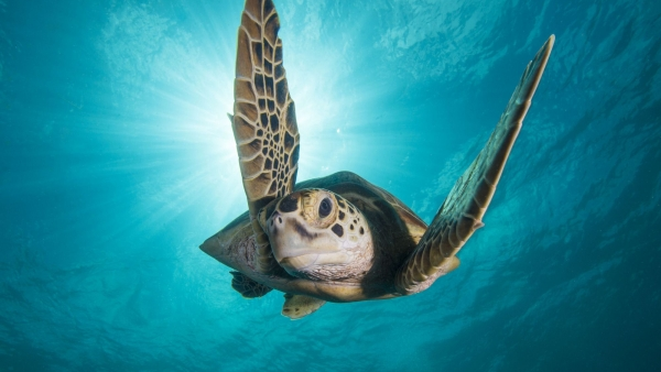 Blu-ray review 'Blue Planet II'