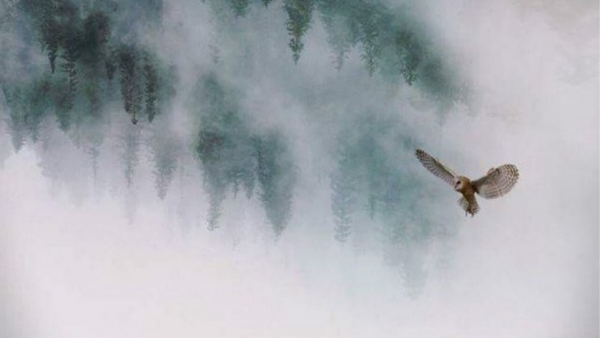 'Twin Peaks' revival krijgt premièredatum