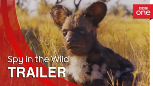 'Spy in the Wild' Trailer BBC