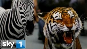 'Zoo' S2 promo